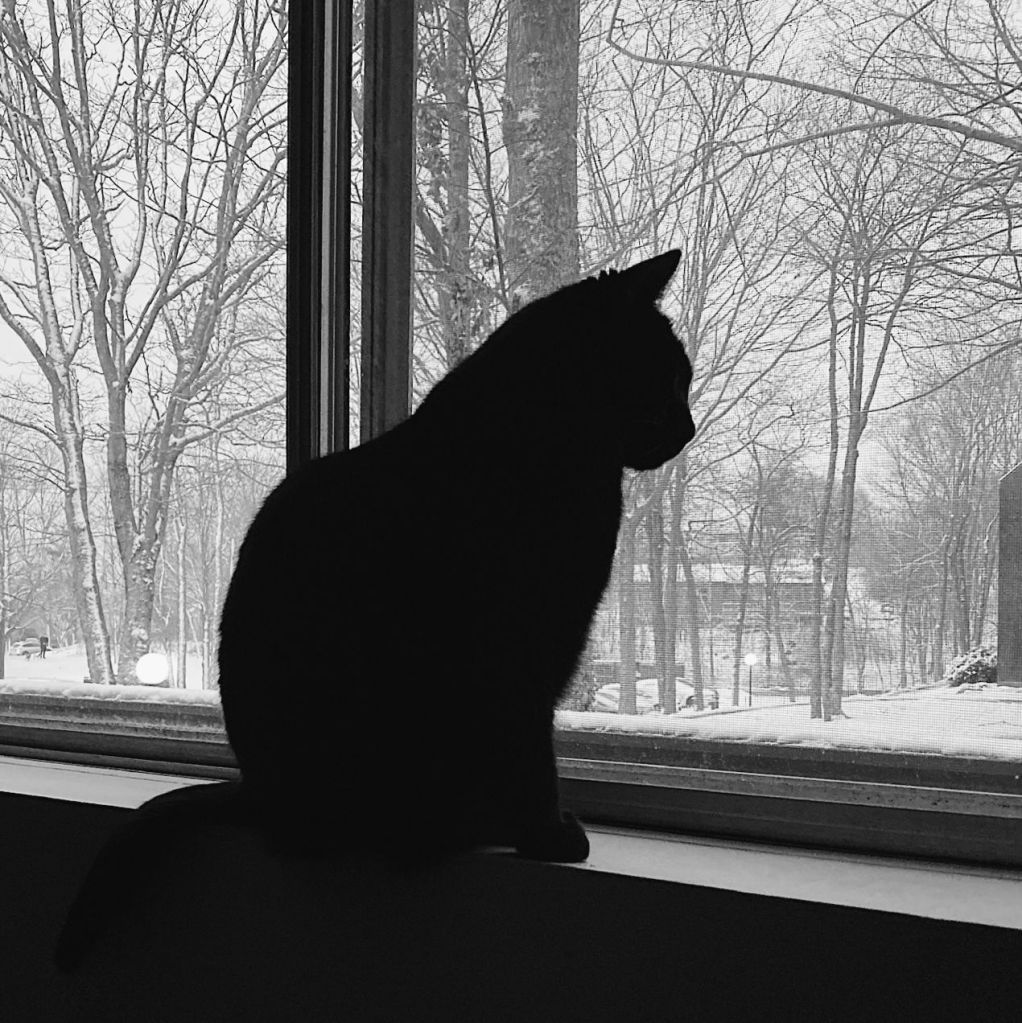 Black and white photo of a cat sitting in a window. Photo by Reghan Skerry.