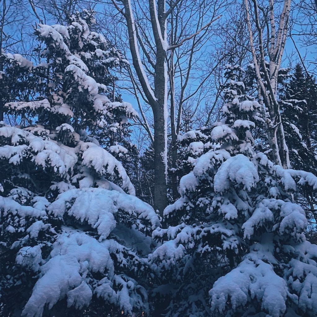 Two trees covered in heavy snow. Photo by Reghan Skerry.