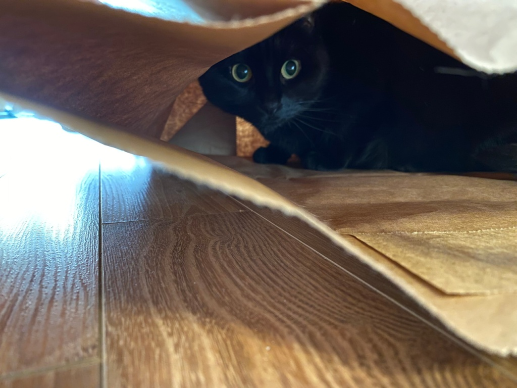 Black cat hiding in a paper bag. Photo by Reghan Skerry.