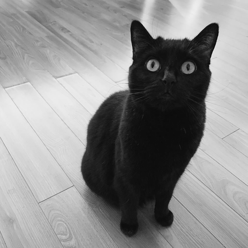Black and white photo of a black cat. Photo by Reghan Skerry.