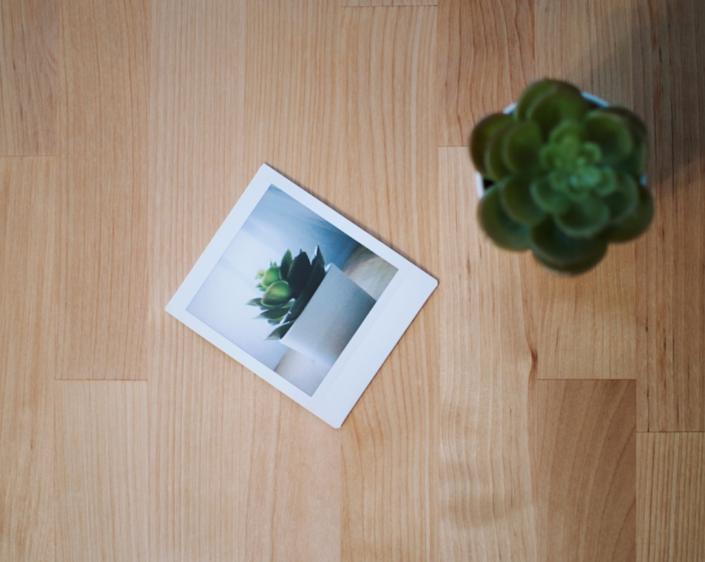 Instax photo of a succulent, next to the same succulent. Photo by Reghan Skerry.