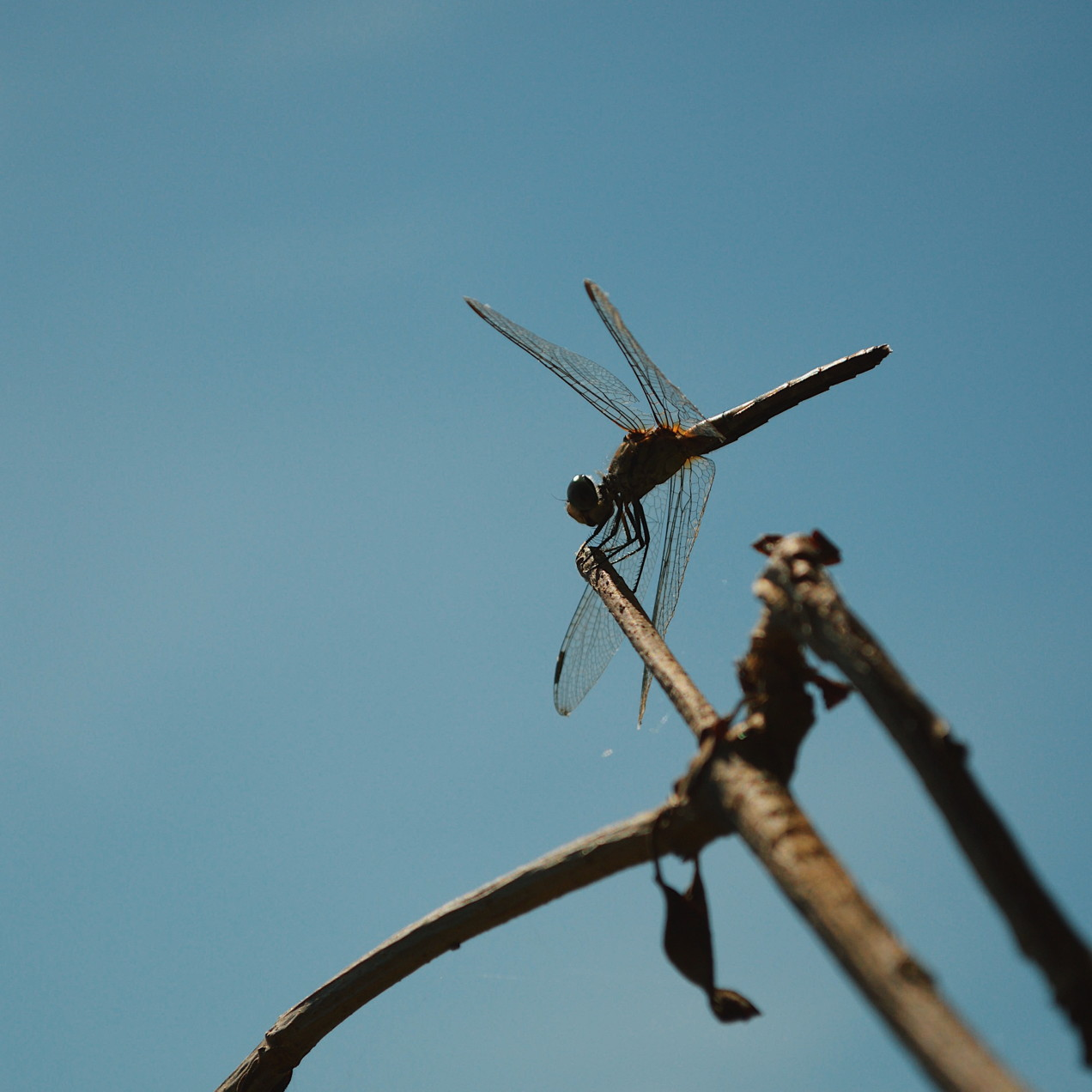 Dragonfly perched on a branch. Photo by Reghan Skerry.