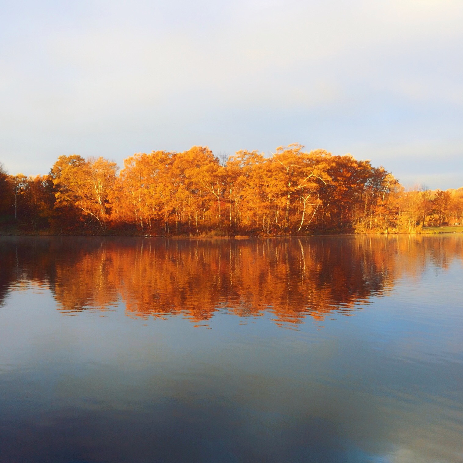 Autumn trees reflected in a lake. Photo by Reghan Skerry.